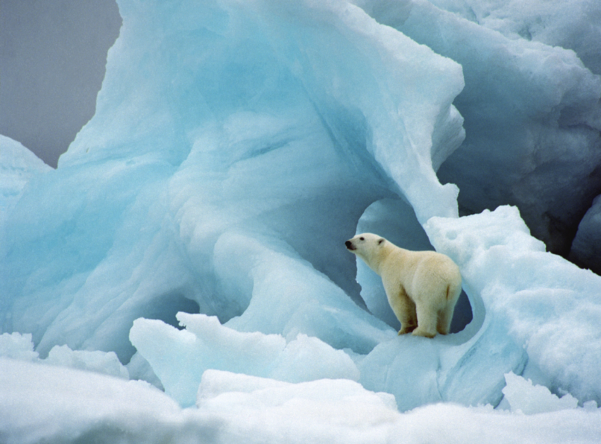 foto Wim van Passel ijsbeer